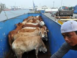 Stop live animal exports -respect all beings right to life-go vegan.