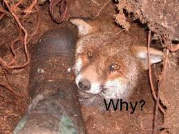why do hunters cause suffering for sport