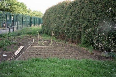 A corner of Finglas Community Garden