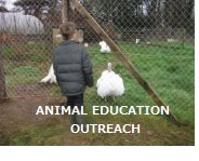 animal_education_outreach_turkey.jpg