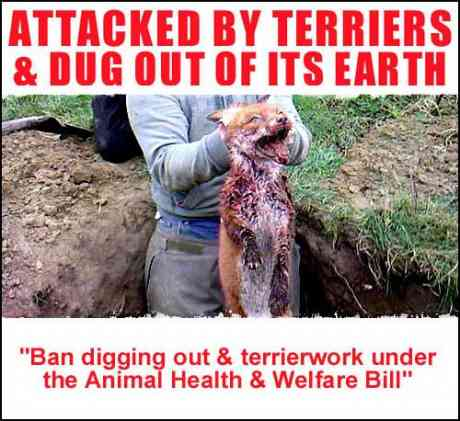 """Animal Welfare"" Act permits THIS!"