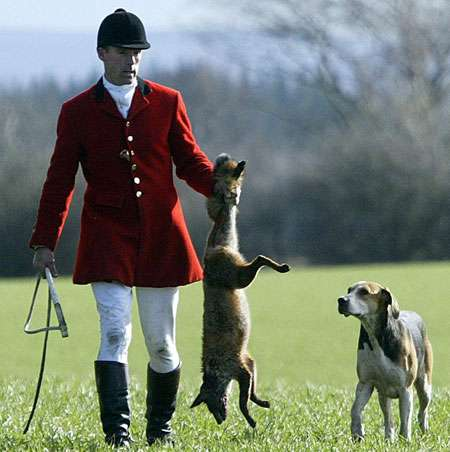 Foxhunting...cruel to foxes and farmers!