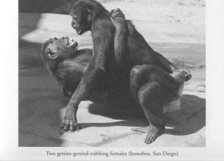 Bonobo Females Get It On