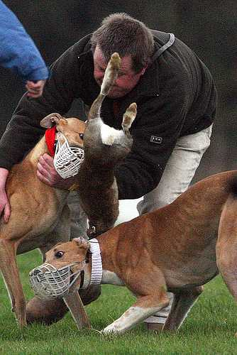 Live Hare Coursing: Sponsored by JP McManus