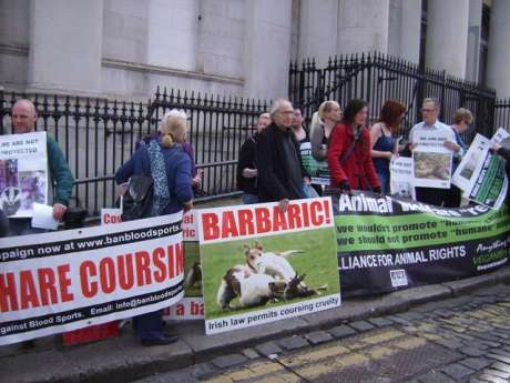 protest against Irish hare coursing...