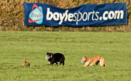 Hare coursing at Clonmel...with Boylesports banner displayed to highlight its sponsorship