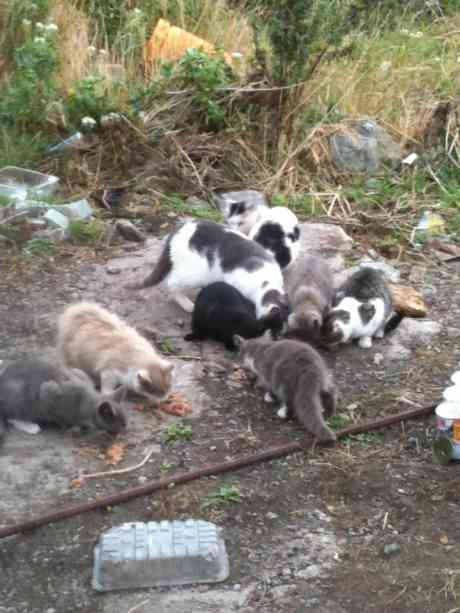 Colony of homeless cats