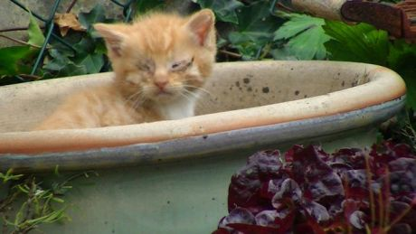 Kitten living in a flowerpot