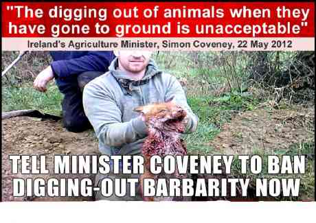 "The ""dig-out""...permitted by the the so-called ""animal welfare"" act"