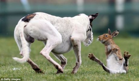 Coursing fun...