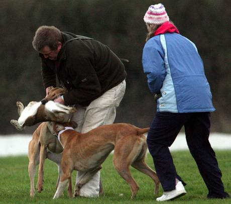 Hare coursing...any fairer than dog fighting?
