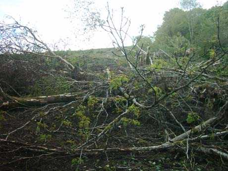 Damage to native trees on the site of the dump